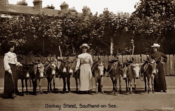 Donkey Stand.jpg