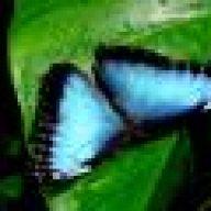 melcochita